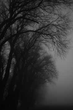 Welcome stranger: Fotos Gothic Aesthetic, Slytherin Aesthetic, Gray Aesthetic, Black Aesthetic Wallpaper, Night Aesthetic, Nature Aesthetic, Black And White Aesthetic, Aesthetic Wallpapers, Dark Landscape