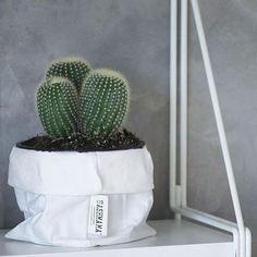 Cactus dressed in UASHMAMA® // thanks to @homehappydk #uashmama #cactus #kaktus #paperbag #nordic #interior #home #happy #design #bolig #hjem #interiør