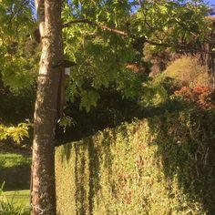 House for sale. Akaroa, New Zealand. Homesteading, New Zealand, Plants, House, Home, Plant, Homes, Planets, Houses