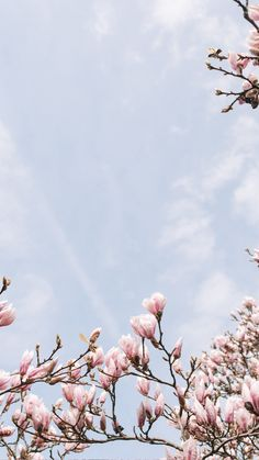 A cherry blossom wallpaper you can use to brighten up your phone. Frühling Wallpaper, Spring Wallpaper, Iphone Background Wallpaper, Tumblr Wallpaper, Nature Wallpaper, Cherry Blossom Wallpaper Iphone, Flower Phone Wallpaper, Aesthetic Backgrounds, Aesthetic Iphone Wallpaper