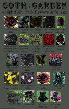 Goth Garden | Delightfully dark flowers & foliage.