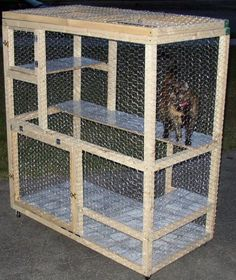 I want to build this for our two boy cats who currently live in the laundry room as it is too dangerous to let them outside and they don't get along with children (and we can't find a new home for them).