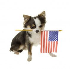 4th of July Pet Safety Tips - Pet Poison Helpline- Great safety tips to keep your pets safe during the 4th of July Holiday season!