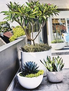 When plantlife needs to survive and thrive in small spaces with minimal maintenance, potted plants are your answer. maintenance garden inspiration This rooftop terrace features a low-maintenance garden Outdoor Pots, Outdoor Gardens, Rooftop Gardens, Outdoor Spaces, Low Maintenance Garden, Terrace Garden, Terrace Ideas, Balcony Gardening, Rooftop Terrace Design