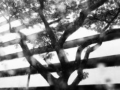 """Moises Saman: """"Meine Bilder sind jetzt dunkler. Aber so war dieses Jahr""""   ZEITmagazin"""