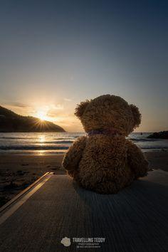 Longing for . by Christian Kneidinger / Teddy Bear Emoji, Teddy Bear Gifts, My Teddy Bear, Cute Teddy Bears, Bear Wallpaper, Emoji Wallpaper, Tedy Bear, Teddy Bear Pictures, Big Bear Lake