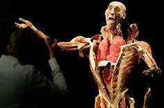 """Tyske Gunther von Hagens, 72, är sannolikt världens mest kontroversielle professor i anatomi. Kropparna i utställningen har genomgått """"plastination"""" - en process som Gunther von Hagens själv uppfann 1977. Liken dräneras på alla kroppsvätskor, som sedan ersätts av flytande plast. Är Body Worlds konst eller vetenskap? Det är klart Konst. Jag såg en stor utställning i Denver i 2006 och det var FANTASTISKT! Tänk om det var daVinc som häde gört den, skulle det var en problem? Följa länk för mer!"""