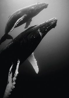 Care about the whales