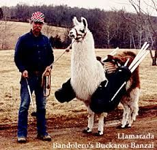 Image result for llama caddy Activities, Animals, Image, Animaux, Animal, Animales, Animais
