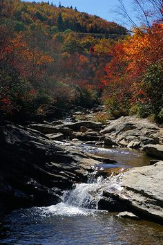 One of our favorite places to hike in Graveyard Fields on the Blue Ridge Parkway