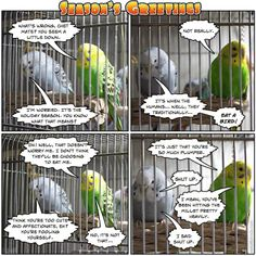 funny budgie comics | Budgie comic #6: Season's Greetings