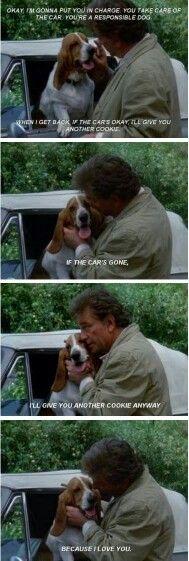 Columbo! ❤ Basset Hound Dog, Beagle Dog, Crazy Cat Lady, Crazy Cats, Columbo Peter Falk, Famous Dogs, Dog Rules, Beagles, Animal Memes