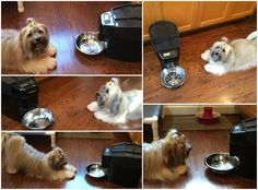 To Dog With Love: Healthy Pet Simply Feed Automatic Pet Feeder #Giveaway