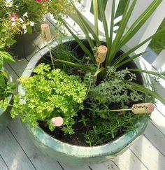 Nombrar plantas usando corchos