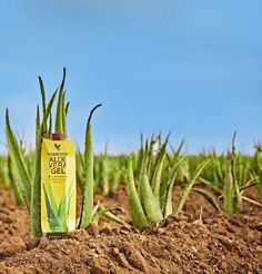 Forever Living - The Aloe Vera Company (US) Online Health Store, Forever Business, Hungry Children, Quick Thinking, World Hunger, Forever Aloe, L Arginine, Forever Living Products