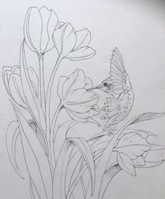 Free Jody Bergsma Coloring Pages Flower Sketches, Art Sketches, Watercolor Flowers, Watercolor Paintings, Watercolors, Watercolor Projects, Floral Drawing, Botanical Drawings, Fabric Painting