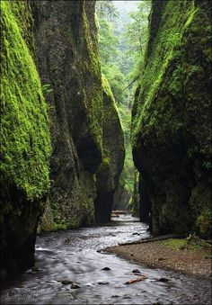 Fern Canyon Fern Canyon is a canyon in the Prairie Creek Redwoods State Park in Humboldt County, California, western United States. The park is managed in cooperation with other nearby redwoods state parks and Redwood National Park.