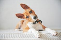 haha, I love puppy head tilts