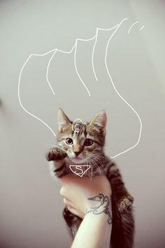 Olha gente! É o Super-Gato