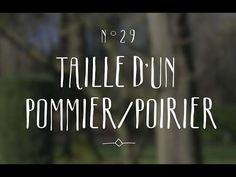 Taille du Pommier et du Poirier (+ conseils en vidéo)