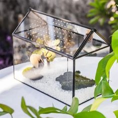 large house shape snail terrarium