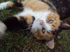 Kocie Tajemnice - Koty | Kociaki | Rasy kotów | Informacje oraz ciekawostki na temat kotów | Adopcje kotów