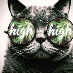 #highlife #highaf #420