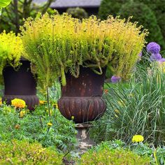 """Keep it Simple-Create a sensation by putting a single magnificent plant in a spectacular pot. Brian does it here with Sedum 'Angelina' in a 3-foot-tall rust-crusted urn. """"There's elegance in simplicity,"""" he says. """"People tend to get too busy and complicated in their container plantings."""" Brian likes this golden sun-loving succulent for its heat and drought tolerance."""