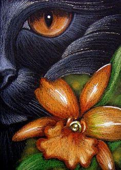 Black Cat ~ Orange Orchid...Cyra Cancel