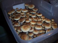 Container Gardening For Beginners Growing mushrooms in bulk for beginners Hydroponic Gardening, Hydroponics, Container Gardening, Indoor Gardening, Hydroponic Growing, Aquaponics Diy, Aquaponics System, Urban Gardening, Garden Mushrooms
