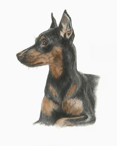 The Miniature Pinscher Print  w/ color  by gensart on Etsy, $30.00