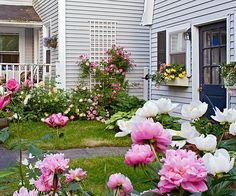 If+you+want+to+leave+a+flowering+legacy,+plant+peonies.+These+hardy+perennials+will+last+for+decades.+In+fact,+in+our+Better+Homes+and+Gardens+Test+Garden®,+we+still+care+for+a+few+peonies+that+were+planted+there+in+the+1950s.+Plant+them+in+full+sun+and+provide+some+support+when+the+plants+are+blooming+to+keep+the+flowers+from+toppling.+Zones:+3-8