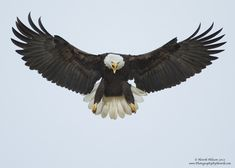 20 Bald Eagle photographs