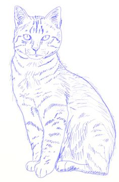 Realistic Drawings How to draw Realistic Cats, step 6 Art Drawings Sketches, Animal Drawings, Cute Drawings, Drawings Of Cats, Pencil Drawings, Realistic Cat Drawing, Drawing Of A Cat, Painting & Drawing, Watercolor Paintings