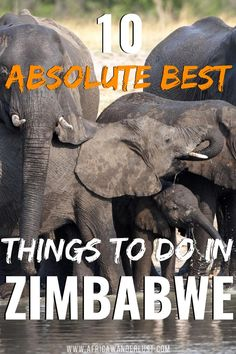 This is your ultimate travel guide showcasing the 10 best things to do in Zimbabwe. This epic post covers popular must-see places like Victoria Falls, The Great Zimbabwe Ruins, Lake Kariba, the Chinhoyi Caves and many more. Zimbabwe, Africa Destinations, Travel Destinations, Holiday Destinations, Best Places To Travel, Cool Places To Visit, Travel Guides, Travel Tips, Travel Goals