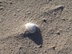 #cadzand #beach #strand