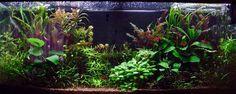 Your favorite 55 - Aquascaping - Aquatic Plant Central Aquarium Ideas, Aquatic Plants, Aquascaping, Planted Aquarium, Aquariums, Water, Water Plants, Tanked Aquariums, Gripe Water