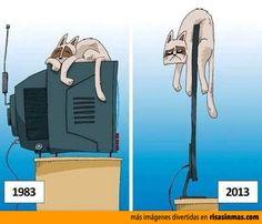 Los gatos y las televisiones.