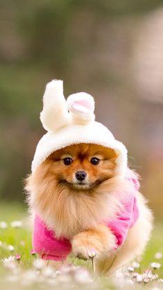Puppy + bunny ears = awesomeness