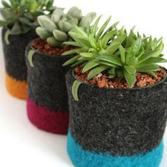 4 Inch Felted Planty Cozies by Papaver Vert