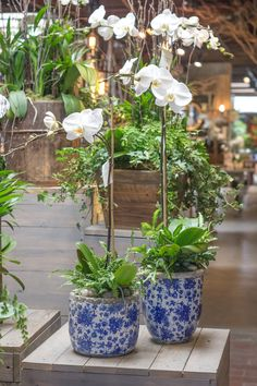 A fresh, new design for our orchid arrangements! Love these blue and white accent pots.  http://rogersgardens.com/orchids-2/
