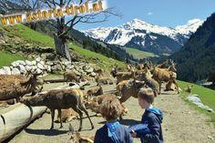 kitzbueheler-alpen-essel-super-extrem-gut-aurach-wildpark-esel-klaus-panorama