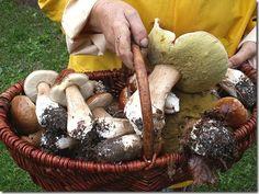 canestro di funghi porcini