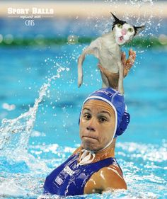 Sports? Good! Cats? Good! Sports cats = good?  - http://lol4eva.com/funny/sports-good-cats-good-sports-cats-good/