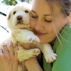 _ Labrador Retriever, My Photos, Dogs, Animals, Labrador Retrievers, Animales, Animaux, Pet Dogs, Doggies