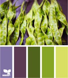 Great contrast of colors. The presence of a saturated violet color shades color of green peas nicely. Such color scheme can be used in design of kitchen or dining room. Palette can be used in the spring-summer wardrobe of a young girl. Scheme Color, Colour Pallette, Colour Schemes, Color Combos, Palette Deco, Pantone 2016, Color Balance, Design Seeds, World Of Color