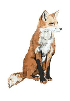 Fox! I love this kind of art style. It looks sophisticated but simple, elegant but plain. CarolinaBlues