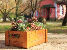 LARGE Succulent centerpieces // wedding centerpieces by GreenPick on Etsy