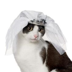 girl cat halloween costumes | Dress Up Your Cat for Halloween With 7 Fun Feline Costumes