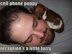 cell phone puppy reception's a little fuzzy Funny Animal Memes, Dog Memes, Funny Animals, Funny Memes, Cute Puppy Breeds, Cute Puppies, Cute Dogs, Puppy Care, Pet Puppy
